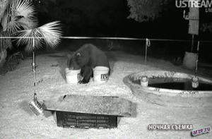 Ночная съемка посещения медведя